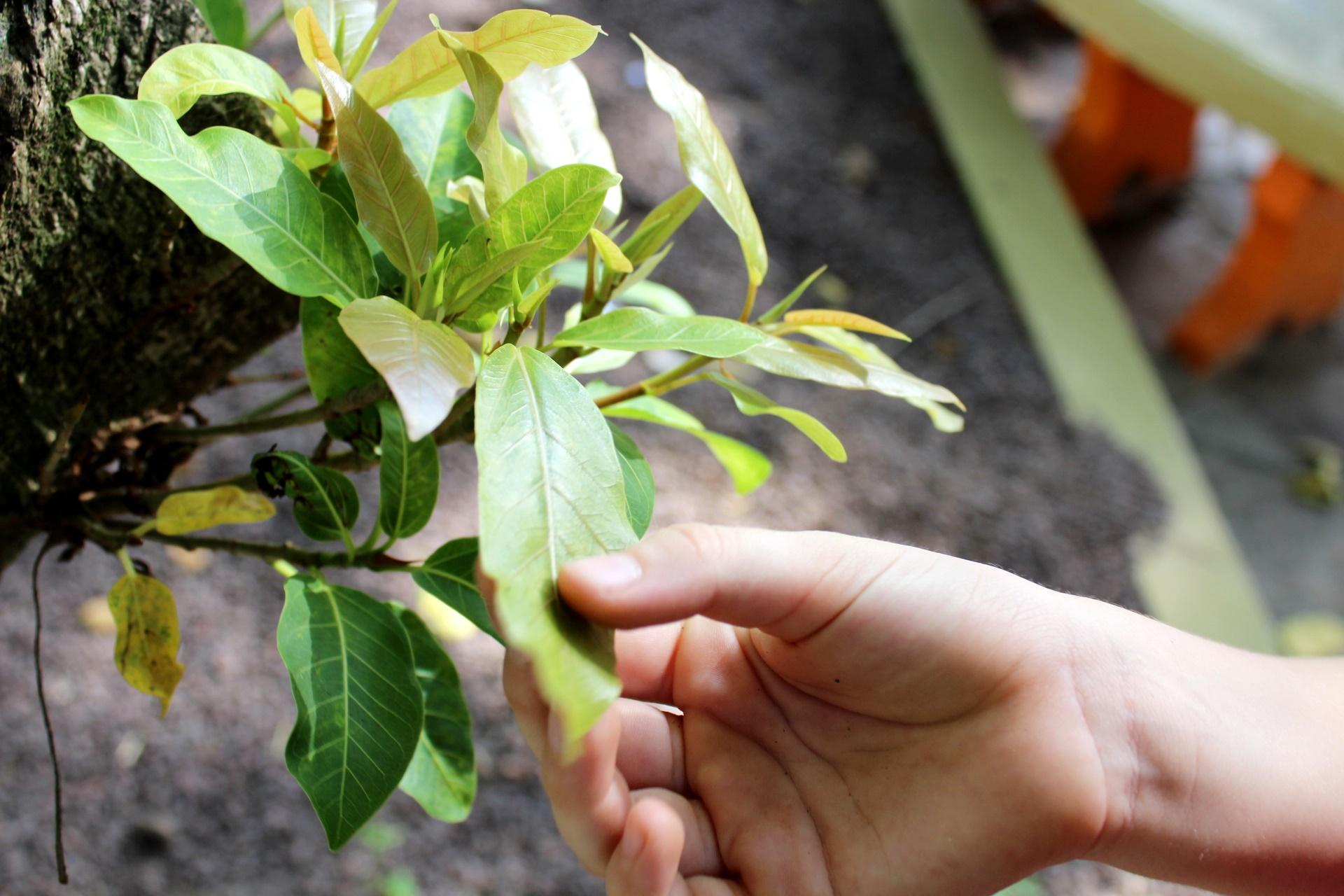 Estudo das Árvores e Plantas