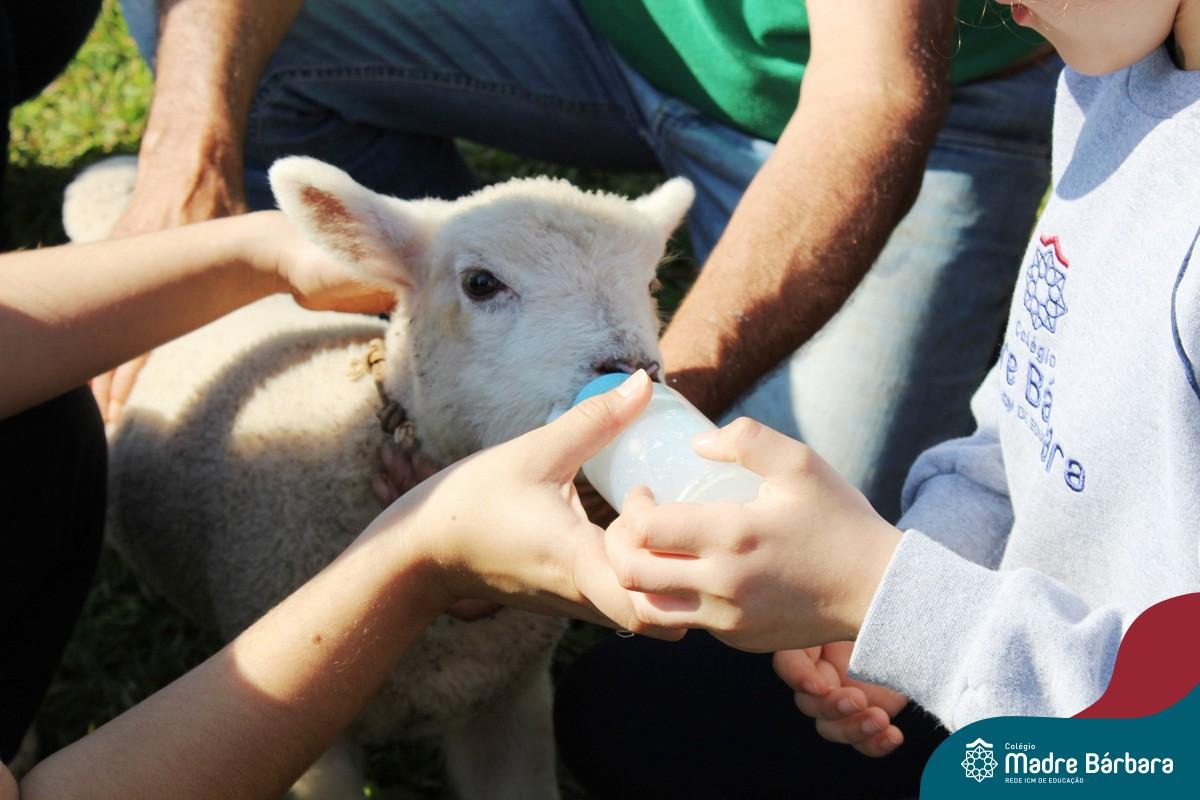 Vida das Ovelhas
