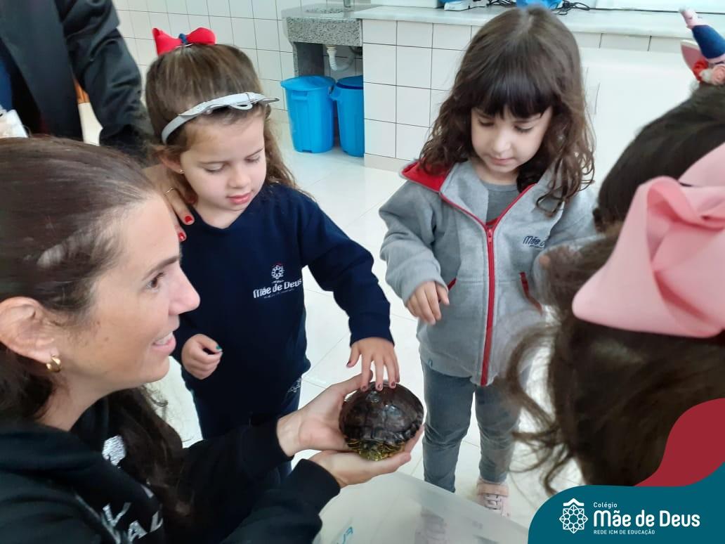 Estudando as Tartarugas no Maternal