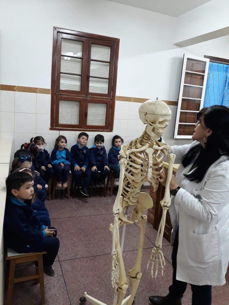 Maternal conhece o esqueleto!